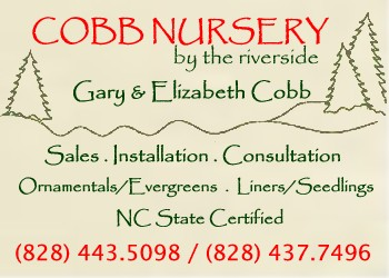 Cobb Tree and Shrub Nursery Morganton, NC