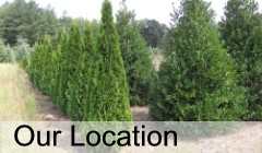 Cobb Tree & Shrub Nursery Location in Morganton, NC